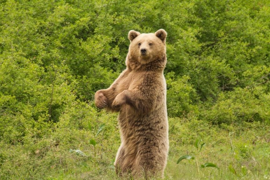 Brown Bear Tracking Trip Of Natural Greece Featured In The Times Amp Escapism Magazine Natural