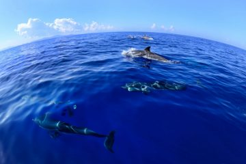 Dolphin volunteering Greece