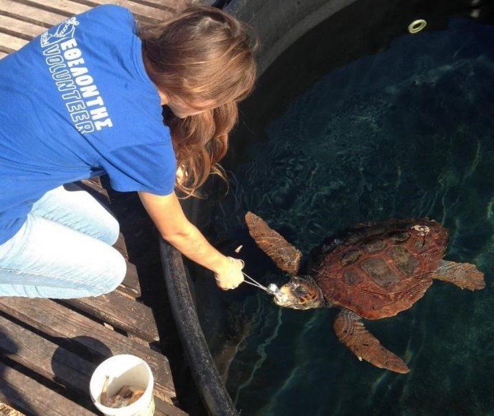 Sea turtle volunteering