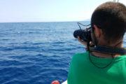 Dolphin dorsal fin photography