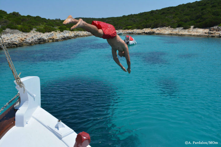 Dolphin conservation Greece