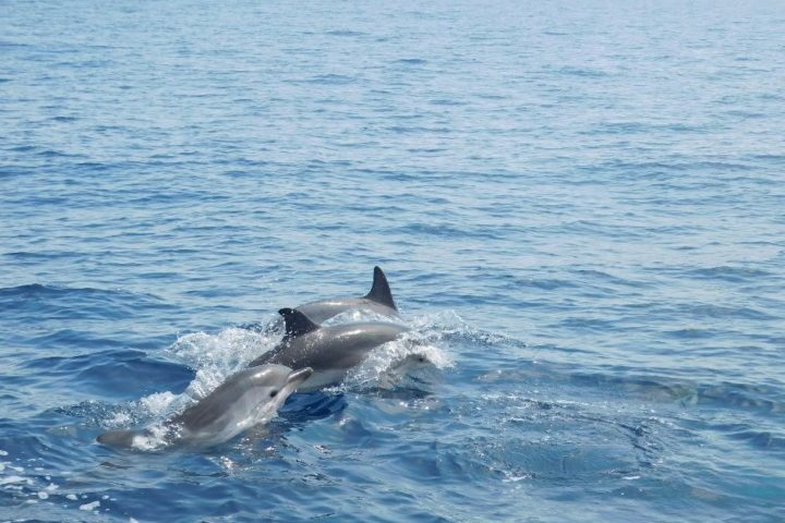 Dolphins Greece