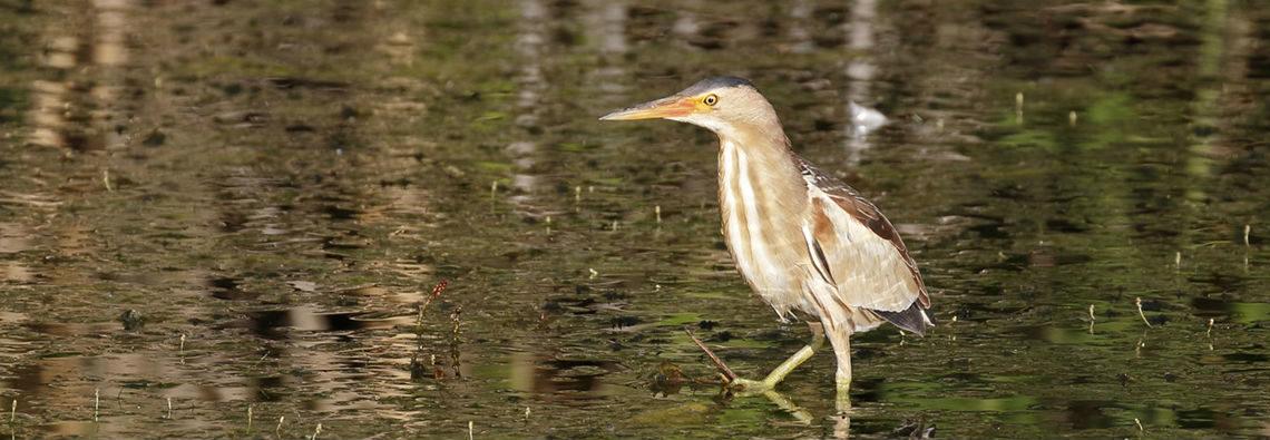 Bird Lake Kerkini