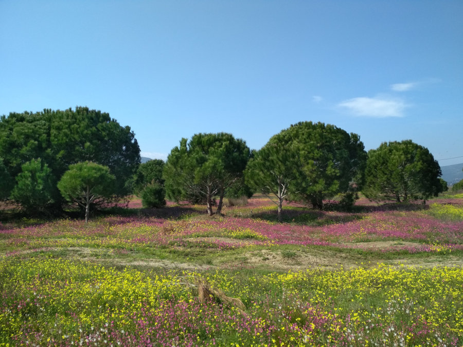 Schinias National Park with Natural Greece