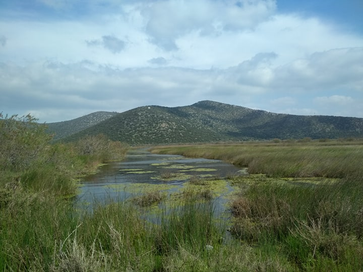 Schinias wetland by Natural Greece