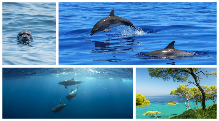 Dolphin Conservation Holiday in Alonissos island