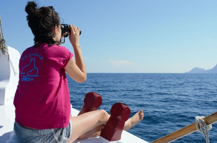 Dolphin spotting on the Mom research vessel