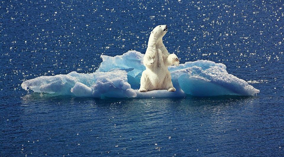 polar bear on ice